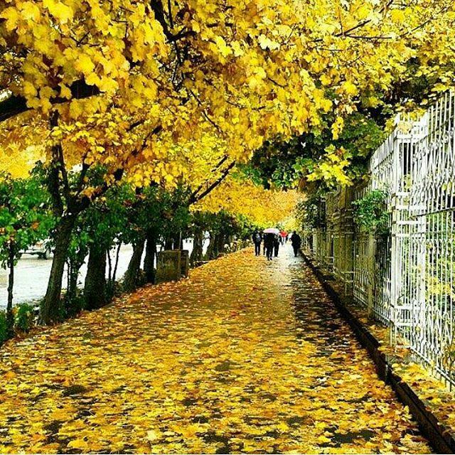 خیابان معروف شیراز