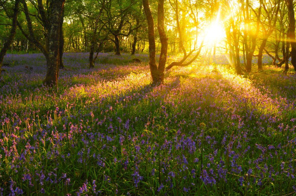 طبیعت زیباترین کشور جهان