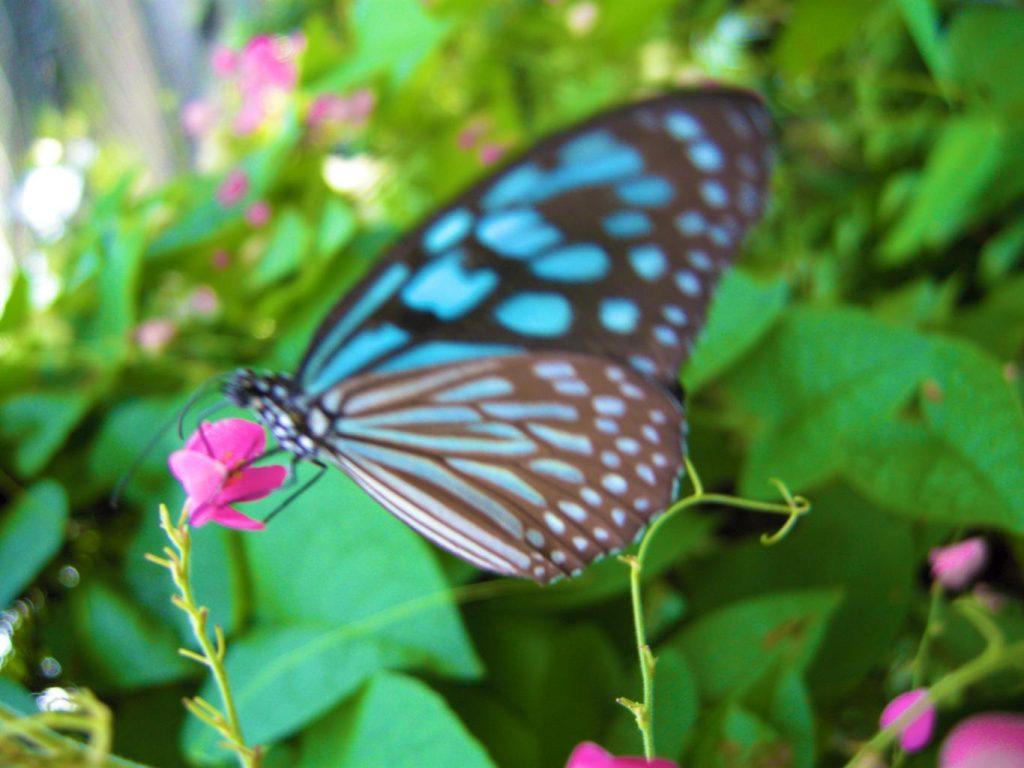 باغ پروانه های سامویی