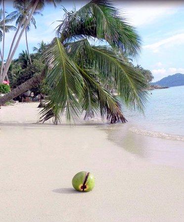 طبیعت ساحل تالینگ نام سامویی