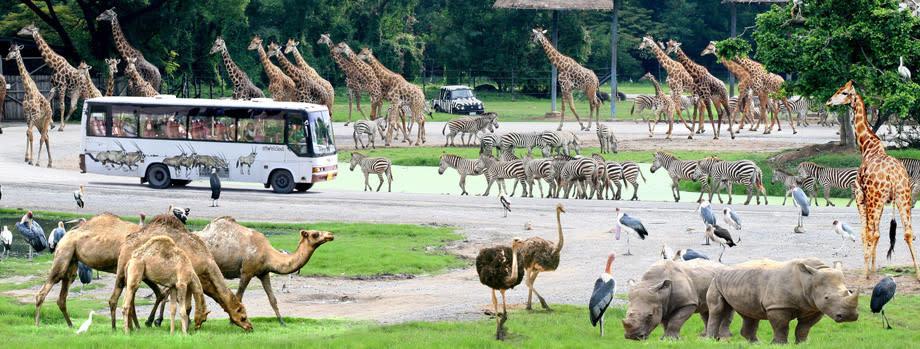 سفر با تایلند با خانواده - باغ وحش بانکوک
