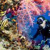 غواصی در جزیره سامویی | بهترین مکان و زمان غواصی + هزینه های غواصی در سامویی