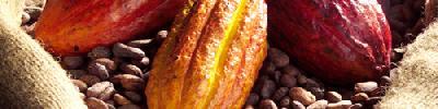 بزرگترین کشور تولید کننده کاکائو